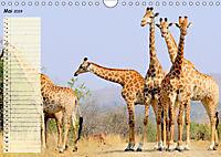 Giganten. Die größten Säugetiere der Welt (Wandkalender 2019 DIN A4 quer) - Produktdetailbild 5