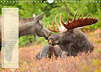 Giganten. Die grössten Säugetiere der Welt (Wandkalender 2019 DIN A4 quer) - Produktdetailbild 6