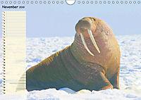 Giganten. Die grössten Säugetiere der Welt (Wandkalender 2019 DIN A4 quer) - Produktdetailbild 11