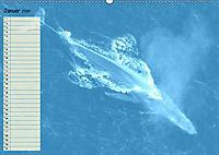Giganten. Die grössten Säugetiere der Welt (Wandkalender 2019 DIN A2 quer) - Produktdetailbild 1