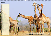 Giganten. Die grössten Säugetiere der Welt (Wandkalender 2019 DIN A2 quer) - Produktdetailbild 5