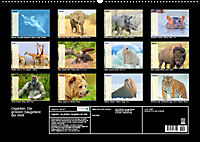 Giganten. Die grössten Säugetiere der Welt (Wandkalender 2019 DIN A2 quer) - Produktdetailbild 13