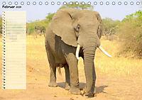 Giganten. Die größten Säugetiere der Welt (Tischkalender 2019 DIN A5 quer) - Produktdetailbild 2