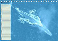 Giganten. Die größten Säugetiere der Welt (Tischkalender 2019 DIN A5 quer) - Produktdetailbild 1