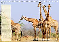 Giganten. Die größten Säugetiere der Welt (Tischkalender 2019 DIN A5 quer) - Produktdetailbild 5