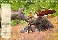 Giganten. Die grössten Säugetiere der Welt (Tischkalender 2019 DIN A5 quer) - Produktdetailbild 6