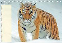 Giganten. Die größten Säugetiere der Welt (Tischkalender 2019 DIN A5 quer) - Produktdetailbild 12