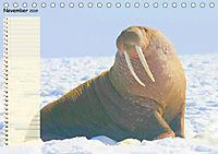 Giganten. Die größten Säugetiere der Welt (Tischkalender 2019 DIN A5 quer) - Produktdetailbild 11