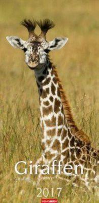 Giraffen 2017