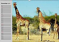 Giraffen. Dem Himmel so nah (Wandkalender 2019 DIN A2 quer) - Produktdetailbild 4