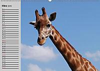 Giraffen. Dem Himmel so nah (Wandkalender 2019 DIN A2 quer) - Produktdetailbild 2
