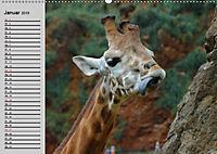 Giraffen. Dem Himmel so nah (Wandkalender 2019 DIN A2 quer) - Produktdetailbild 3