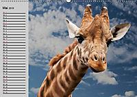 Giraffen. Dem Himmel so nah (Wandkalender 2019 DIN A2 quer) - Produktdetailbild 5