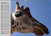 Giraffen. Dem Himmel so nah (Wandkalender 2019 DIN A2 quer) - Produktdetailbild 8