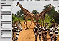 Giraffen. Dem Himmel so nah (Wandkalender 2019 DIN A2 quer) - Produktdetailbild 10