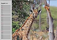 Giraffen. Dem Himmel so nah (Wandkalender 2019 DIN A2 quer) - Produktdetailbild 11