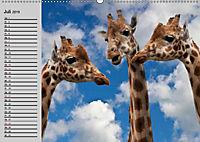 Giraffen. Dem Himmel so nah (Wandkalender 2019 DIN A2 quer) - Produktdetailbild 13