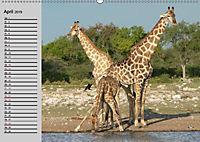 Giraffen. Dem Himmel so nah (Wandkalender 2019 DIN A2 quer) - Produktdetailbild 9