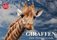 Giraffen. Dem Himmel so nah (Wandkalender 2019 DIN A2 quer), Elisabeth Stanzer
