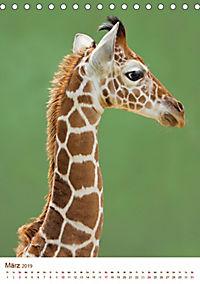Giraffen: Schlanke Schönheiten aus Afrika (Tischkalender 2019 DIN A5 hoch) - Produktdetailbild 3