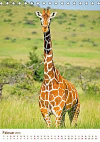 Giraffen: Schlanke Schönheiten aus Afrika (Tischkalender 2019 DIN A5 hoch) - Produktdetailbild 2