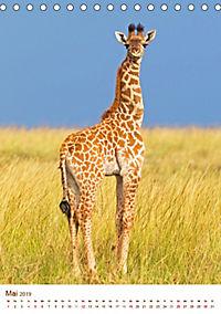 Giraffen: Schlanke Schönheiten aus Afrika (Tischkalender 2019 DIN A5 hoch) - Produktdetailbild 5