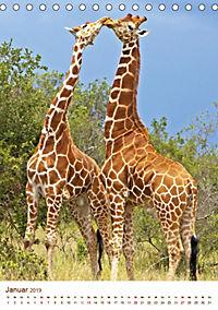 Giraffen: Schlanke Schönheiten aus Afrika (Tischkalender 2019 DIN A5 hoch) - Produktdetailbild 1