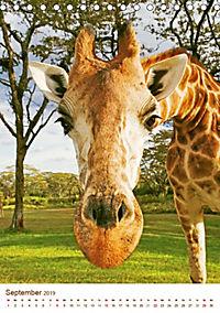 Giraffen: Schlanke Schönheiten aus Afrika (Tischkalender 2019 DIN A5 hoch) - Produktdetailbild 9