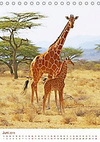 Giraffen: Schlanke Schönheiten aus Afrika (Tischkalender 2019 DIN A5 hoch) - Produktdetailbild 6