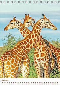 Giraffen: Schlanke Schönheiten aus Afrika (Tischkalender 2019 DIN A5 hoch) - Produktdetailbild 7