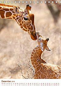 Giraffen: Schlanke Schönheiten aus Afrika (Tischkalender 2019 DIN A5 hoch) - Produktdetailbild 12