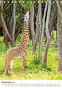 Giraffen: Schlanke Schönheiten aus Afrika (Tischkalender 2019 DIN A5 hoch) - Produktdetailbild 11
