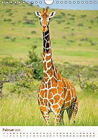Giraffen: Schlanke Schönheiten aus Afrika (Wandkalender 2019 DIN A4 hoch) - Produktdetailbild 2