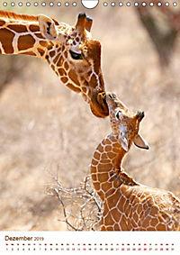 Giraffen: Schlanke Schönheiten aus Afrika (Wandkalender 2019 DIN A4 hoch) - Produktdetailbild 12