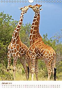 Giraffen: Schlanke Schönheiten aus Afrika (Wandkalender 2019 DIN A4 hoch) - Produktdetailbild 1