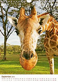 Giraffen: Schlanke Schönheiten aus Afrika (Wandkalender 2019 DIN A4 hoch) - Produktdetailbild 9