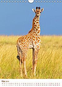 Giraffen: Schlanke Schönheiten aus Afrika (Wandkalender 2019 DIN A4 hoch) - Produktdetailbild 5