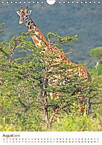 Giraffen: Schlanke Schönheiten aus Afrika (Wandkalender 2019 DIN A4 hoch) - Produktdetailbild 8