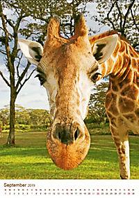 Giraffen: Schlanke Schönheiten aus Afrika (Wandkalender 2019 DIN A2 hoch) - Produktdetailbild 9