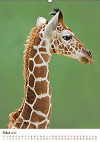 Giraffen: Schlanke Schönheiten aus Afrika (Wandkalender 2019 DIN A2 hoch) - Produktdetailbild 3