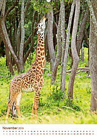 Giraffen: Schlanke Schönheiten aus Afrika (Wandkalender 2019 DIN A2 hoch) - Produktdetailbild 11