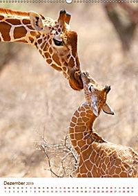 Giraffen: Schlanke Schönheiten aus Afrika (Wandkalender 2019 DIN A2 hoch) - Produktdetailbild 12