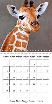 Giraffes - Swinging Elegance (Wall Calendar 2019 300 × 300 mm Square) - Produktdetailbild 2
