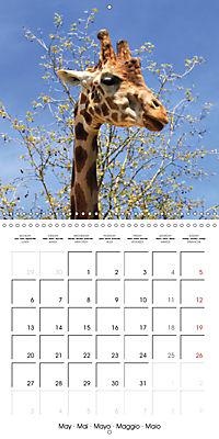 Giraffes - Swinging Elegance (Wall Calendar 2019 300 × 300 mm Square) - Produktdetailbild 5