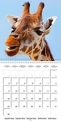 Giraffes - Swinging Elegance (Wall Calendar 2019 300 × 300 mm Square) - Produktdetailbild 9