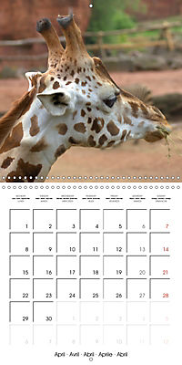 Giraffes - Swinging Elegance (Wall Calendar 2019 300 × 300 mm Square) - Produktdetailbild 4
