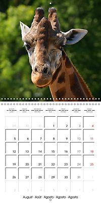 Giraffes - Swinging Elegance (Wall Calendar 2019 300 × 300 mm Square) - Produktdetailbild 8