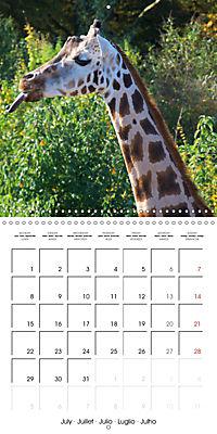 Giraffes - Swinging Elegance (Wall Calendar 2019 300 × 300 mm Square) - Produktdetailbild 7