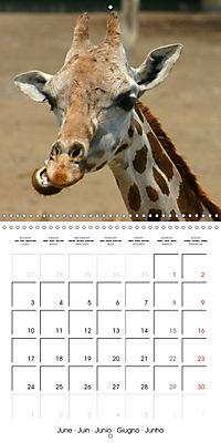 Giraffes - Swinging Elegance (Wall Calendar 2019 300 × 300 mm Square) - Produktdetailbild 6