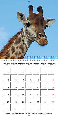 Giraffes - Swinging Elegance (Wall Calendar 2019 300 × 300 mm Square) - Produktdetailbild 12